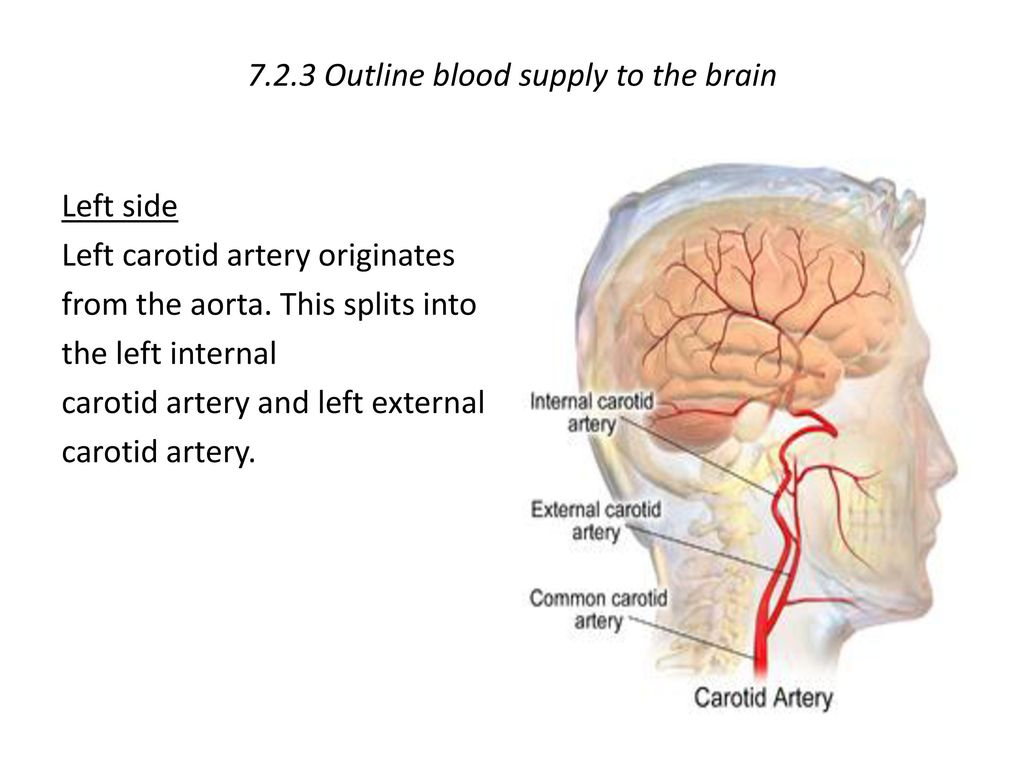 7.2.3 Outline blood supply to the brain