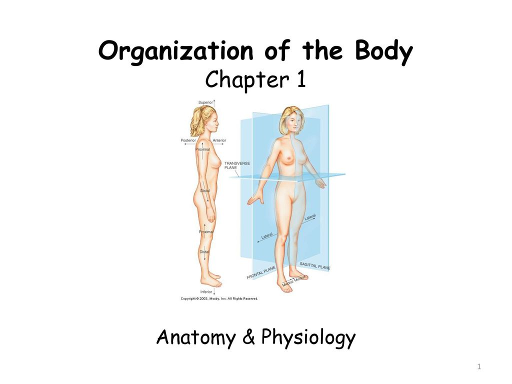 Fantastic Definition Of Inferior In Anatomy Motif - Anatomy Ideas ...