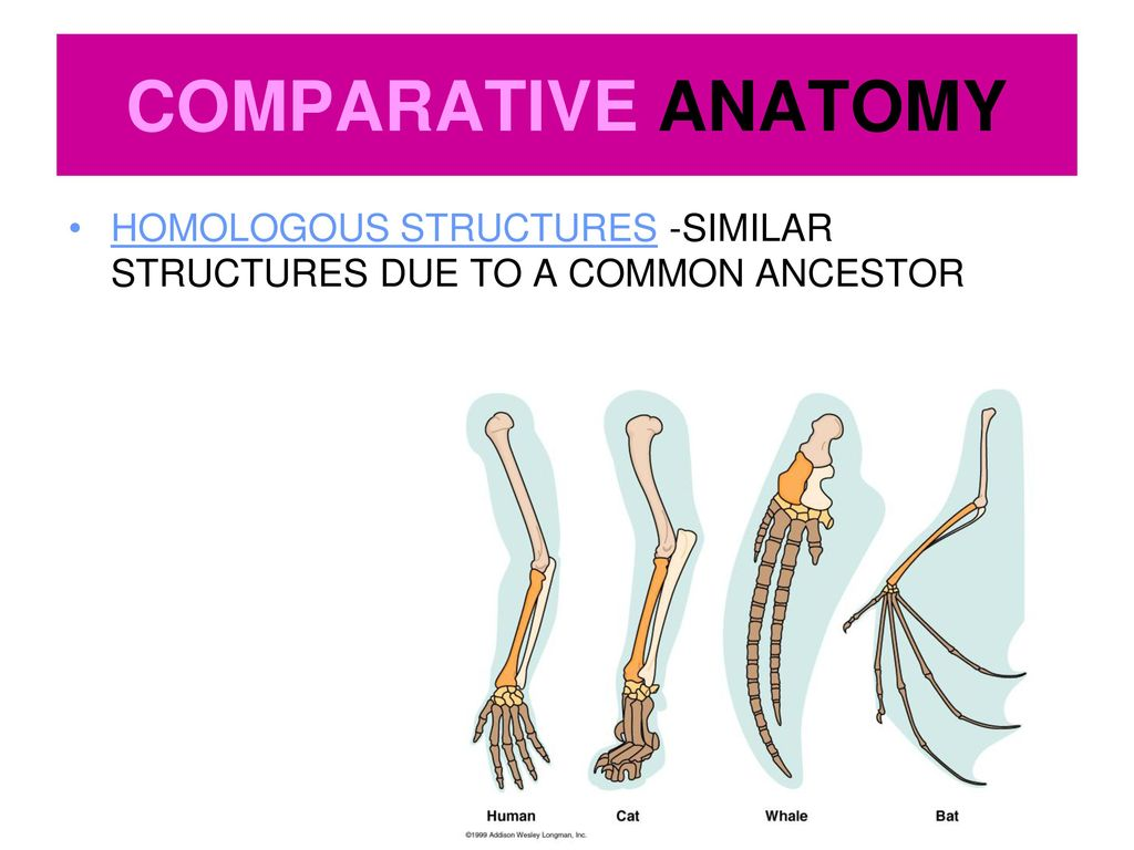 Ziemlich Evidence Of Evolution Comparative Anatomy Galerie ...