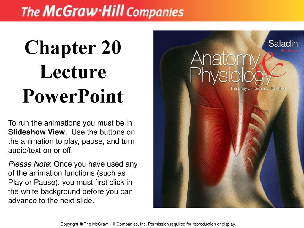 Magnificent Mcgraw Hill Anatomy And Physiology Saladin Motif ...