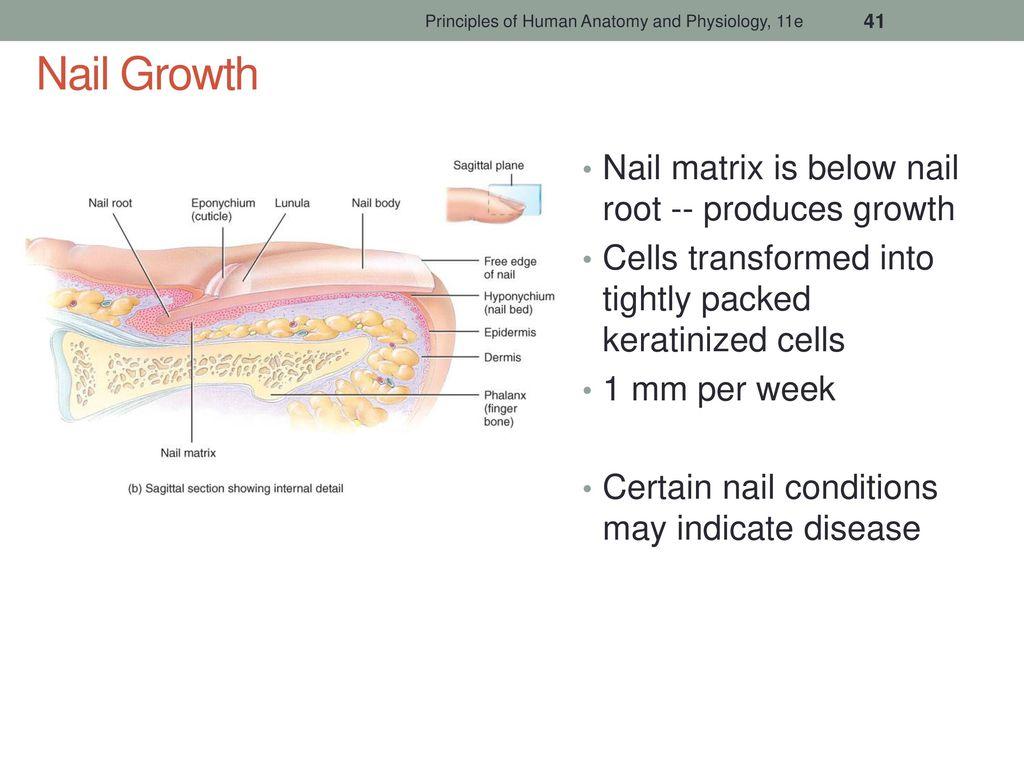 Unique Nail Cuticle Anatomy Inspiration - Nail Art Ideas - morihati.com