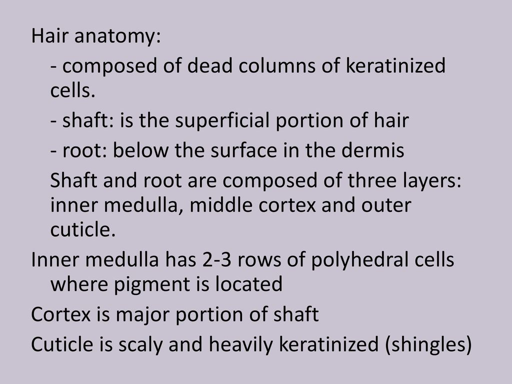Nice Anatomy Of Hair Strand Image Collection - Physiology Of Human ...