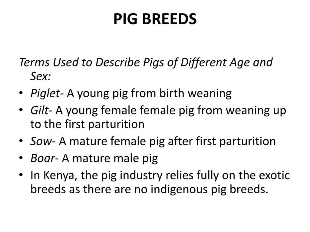 common livestock breeds - ppt download