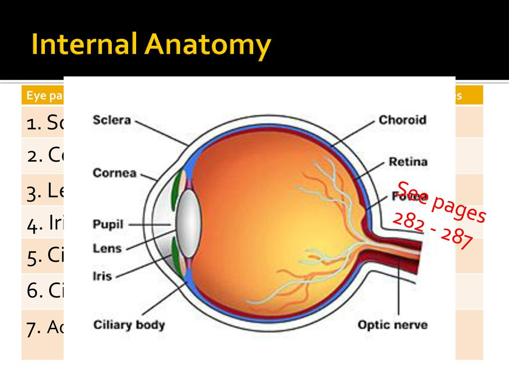 Luxury Anatomy Of Sclera Pattern - Physiology Of Human Body Images ...