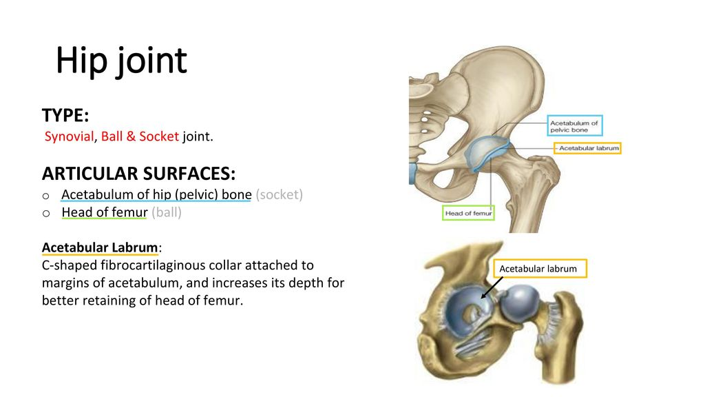 Hip Knee Ankle Joints By Biochemistry Team Editing File Color