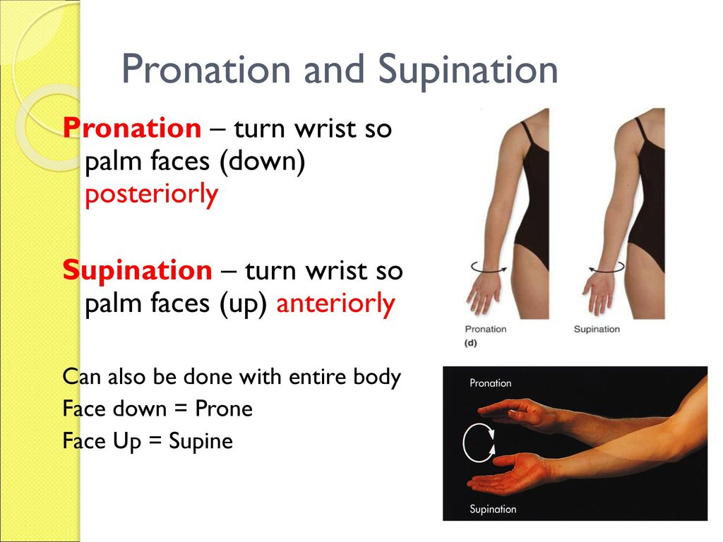 Fine Pronation Vs Supination Component - Anatomy Ideas - yunoki.info