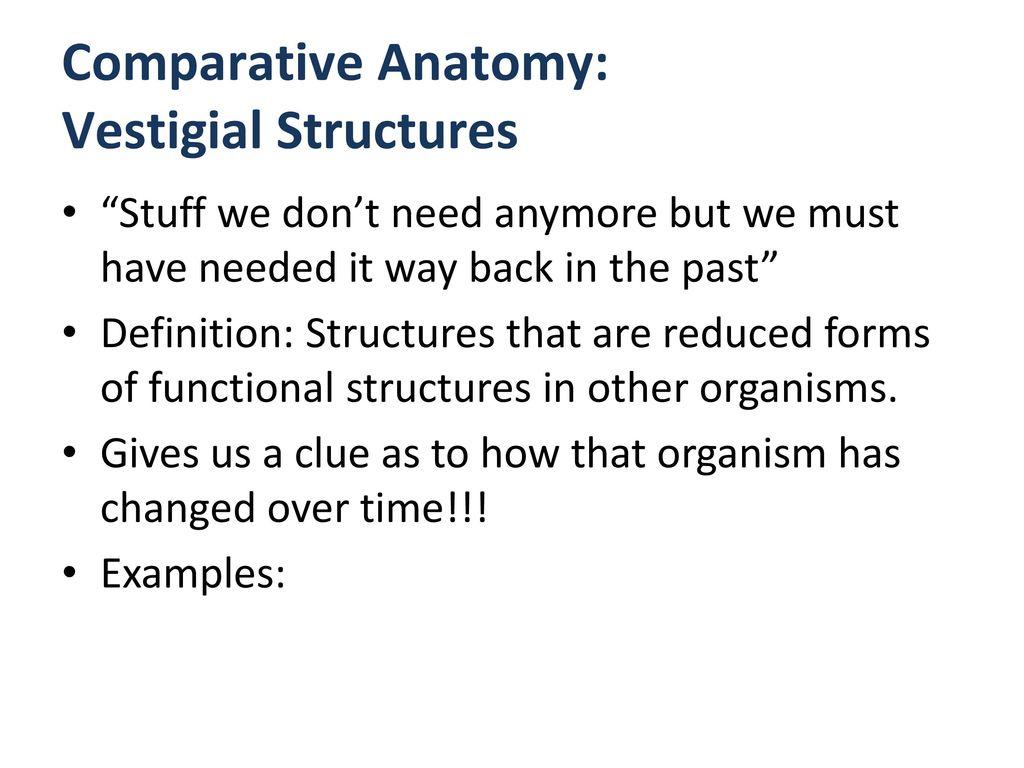 Outstanding Examples Of Anatomy Photos - Anatomy Ideas - yunoki.info