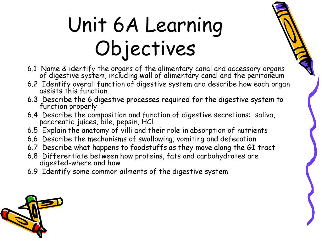 Enchanting Anatomy And Physiology Learning Objectives Ensign ...