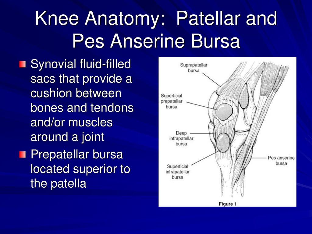 Old Fashioned Knee Anatomy Bursa Frieze - Physiology Of Human Body ...