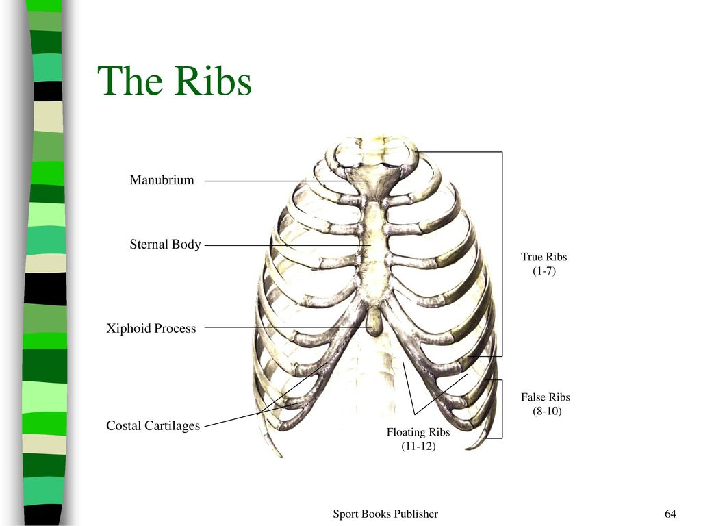 Encantador Xiphoid Process Swelling Adorno - Anatomía de Las ...