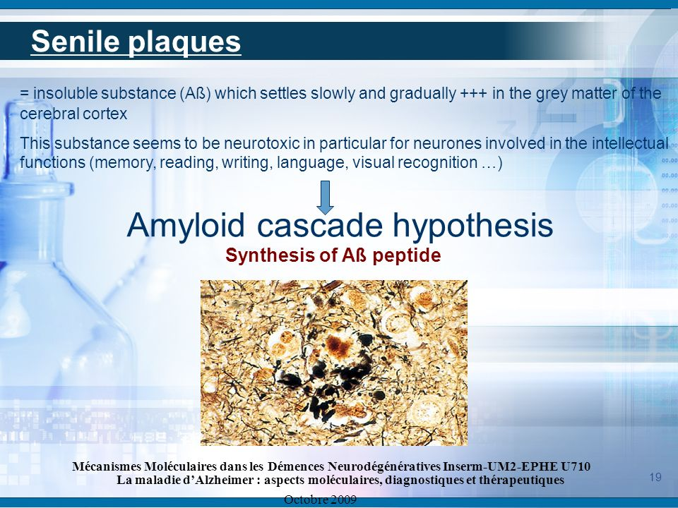 Amyloid cascade hypothesis Synthesis of Aß peptide
