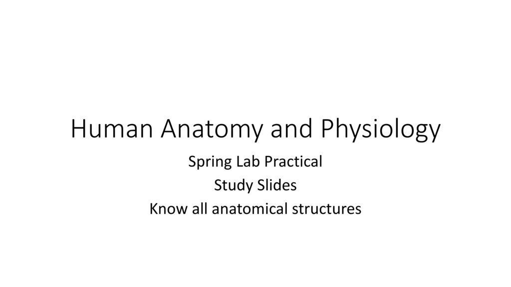 Perfect Anatomy And Physiology In The Laboratory Images - Anatomy ...