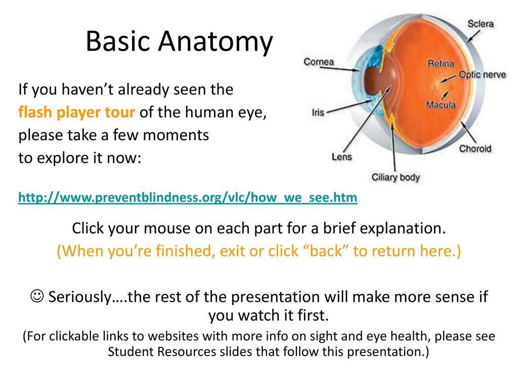 Perfect Basic Anatomy Of Eye Images - Anatomy Ideas - yunoki.info
