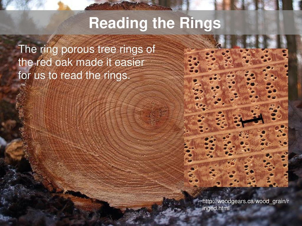 wood ring cobalt engagement women lined gift red wedding rings band s oak exotic men media
