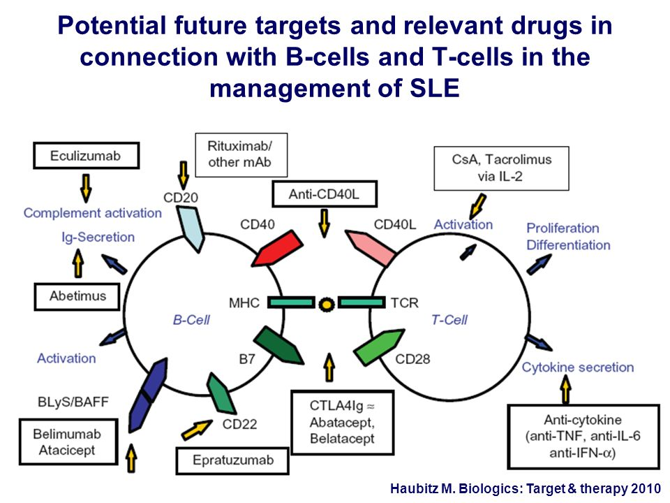 Potential future targets and relevant drugs in connection with B-cells and T-cells in the management of SLE