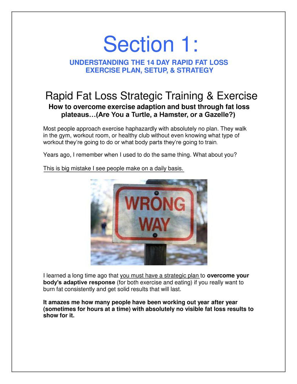 Gut flora weight loss plan