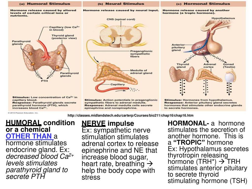 Contemporáneo Midlands Tech Anatomy And Physiology Regalo - Imágenes ...