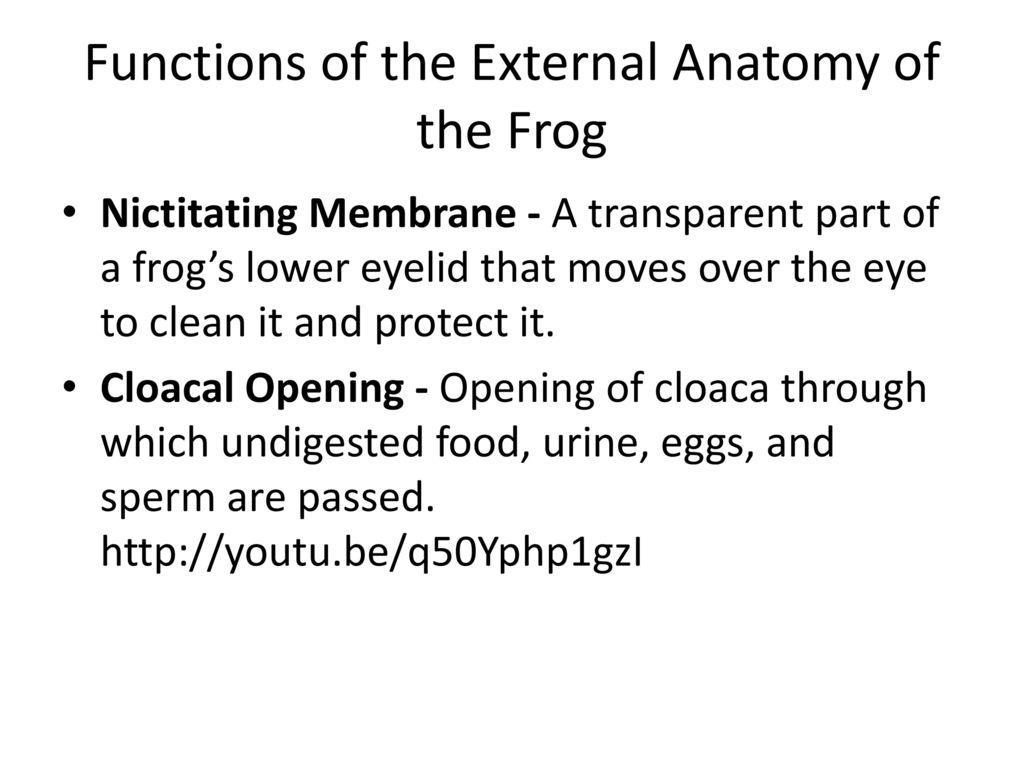 Amazing External Anatomy Of A Frog Illustration - Anatomy Ideas ...
