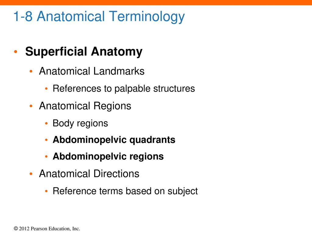 Groß Anatomy And Physiology Anatomical Terms Galerie - Menschliche ...