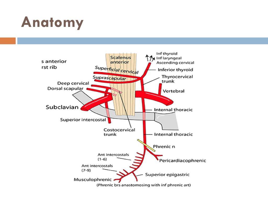 Nett Henry Grau Anatomie Des Menschlichen Körpers Fotos - Anatomie ...