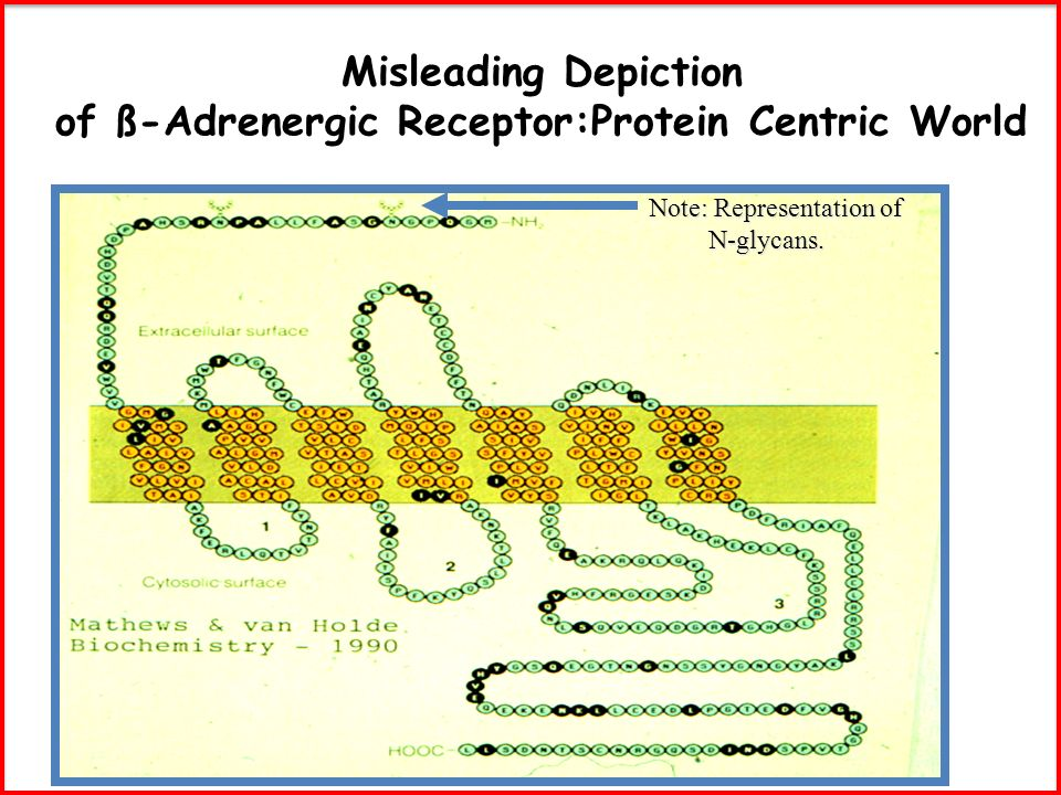 Misleading Depiction of ß-Adrenergic Receptor:Protein Centric World