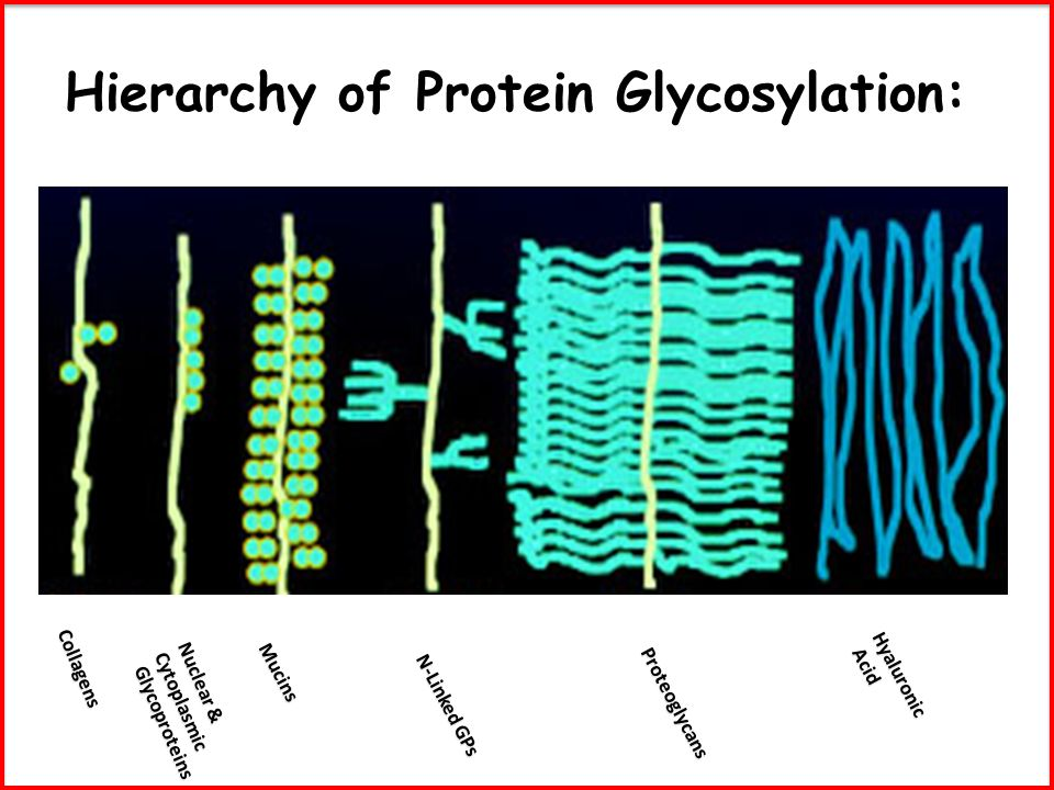 Hierarchy of Protein Glycosylation: