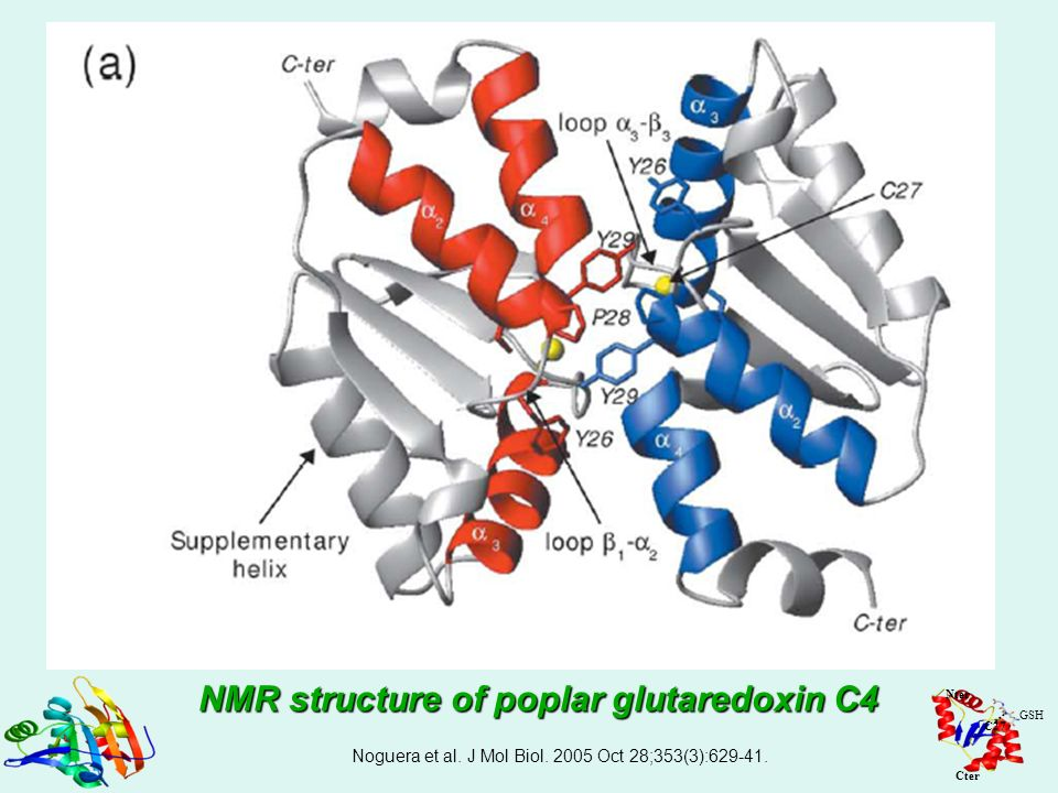 NMR structure of poplar glutaredoxin C4
