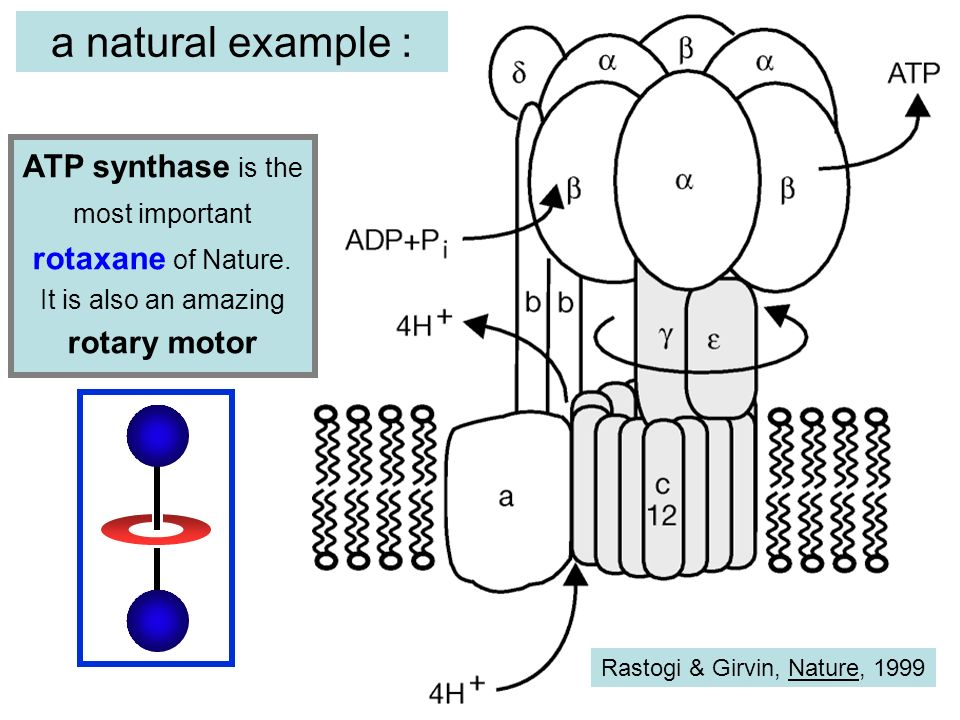 a natural example : ATP synthase is the most important rotaxane of Nature. It is also an amazing rotary motor.