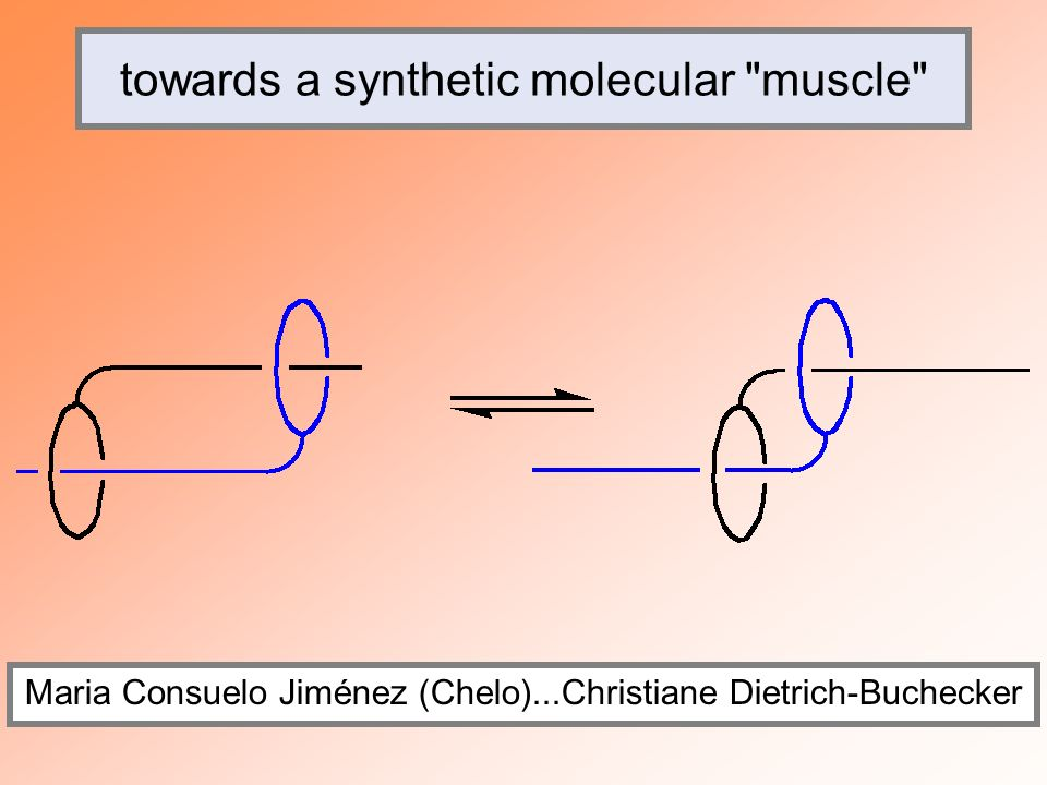 towards a synthetic molecular muscle