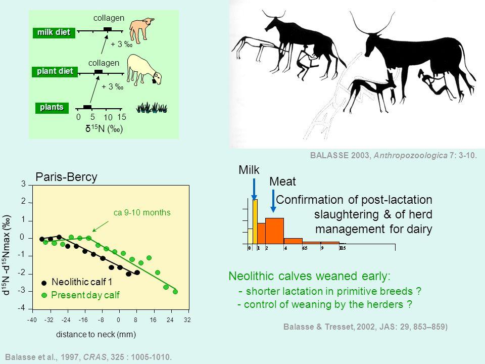 Neolithic calves weaned early: