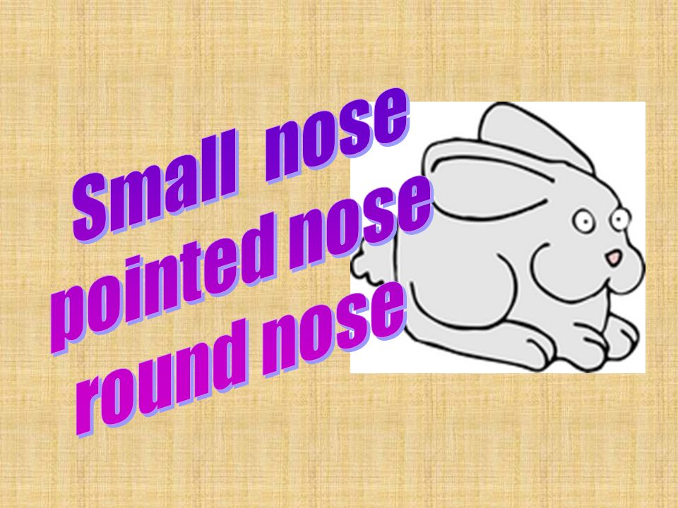 Small nose pointed nose round nose