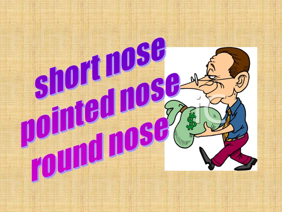 short nose pointed nose round nose