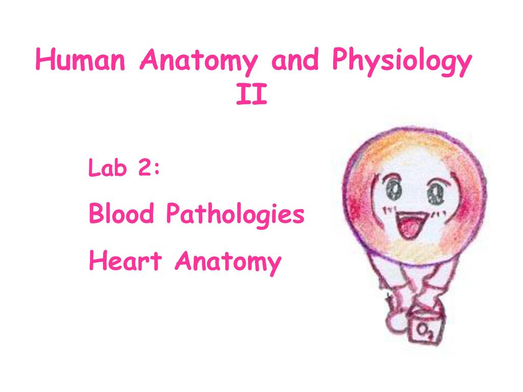 Dorable Anatomy And Physiology Lectures Mp3 Ornament - Anatomy Ideas ...