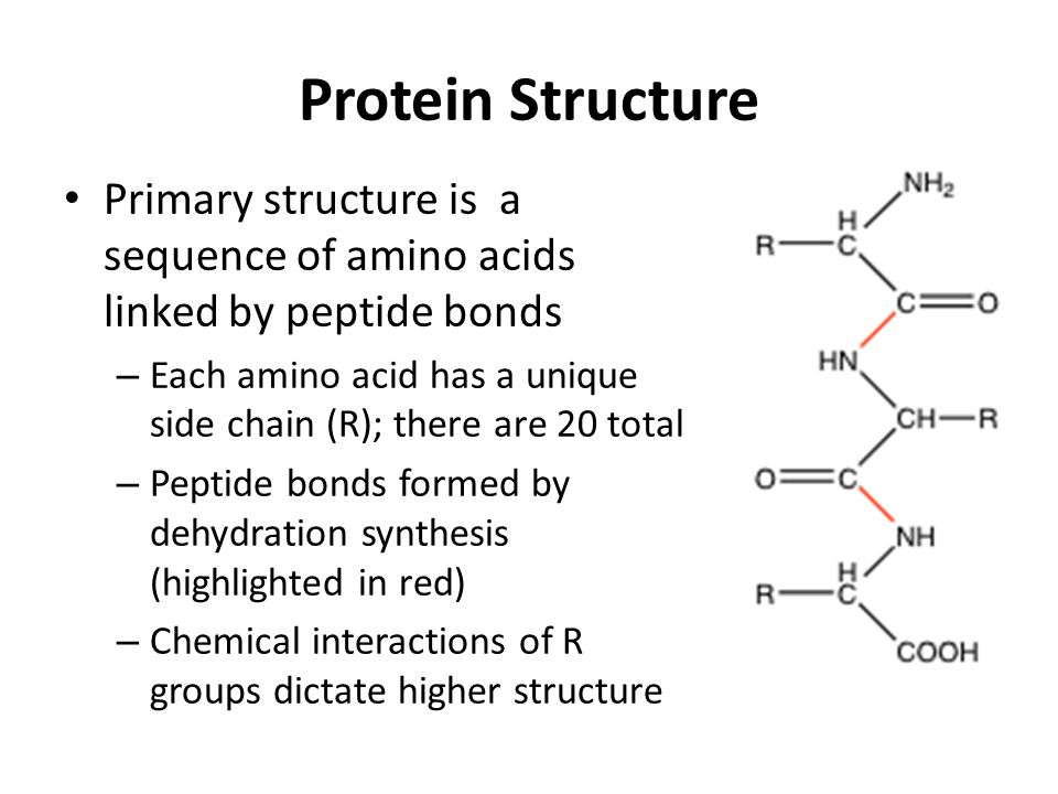 Protein Structure Primary structure is a sequence of amino acids linked by peptide bonds.