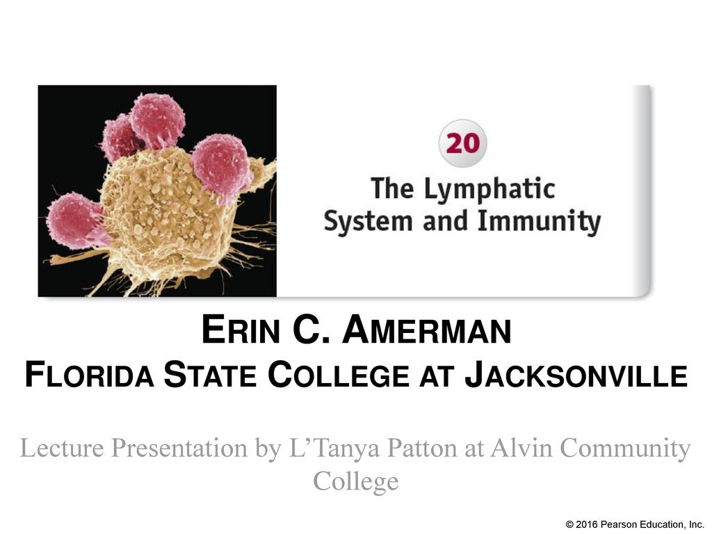 Magnificent Anatomy And Physiology Fsu Mold - Physiology Of Human ...