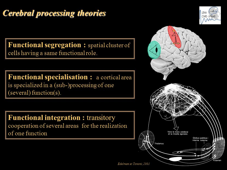 Cerebral processing theories