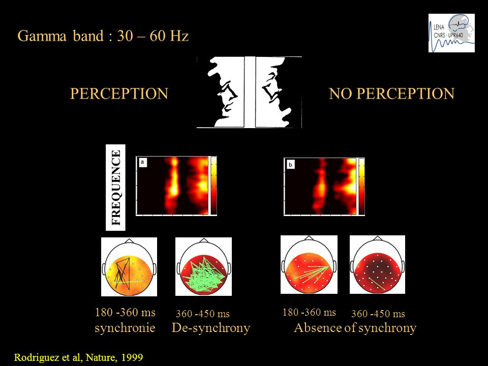 Gamma band : 30 – 60 Hz PERCEPTION NO PERCEPTION synchronie