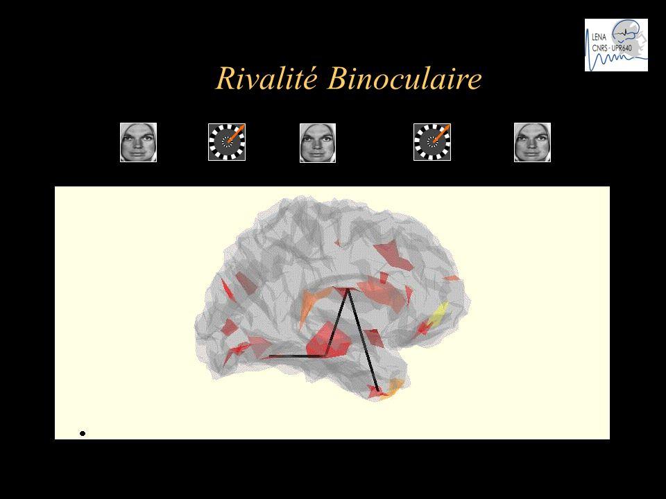 Rivalité Binoculaire t … .. .… Cosmelli et al