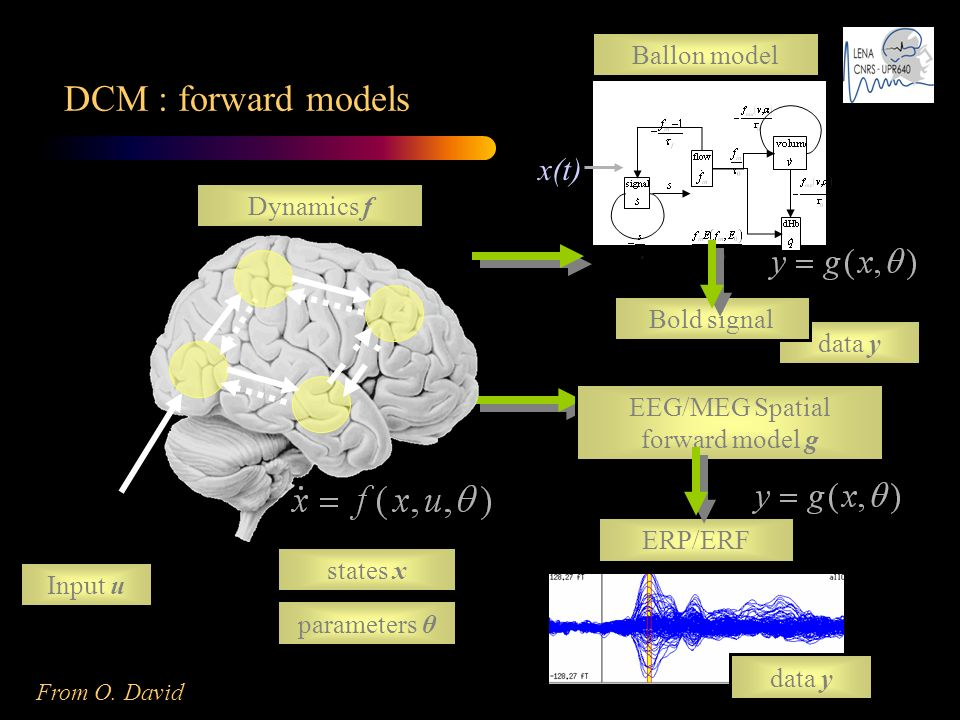 EEG/MEG Spatial forward model g