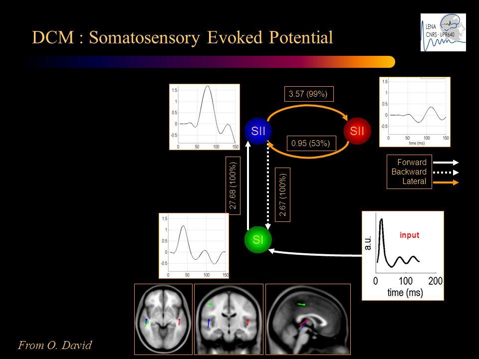 DCM : Somatosensory Evoked Potential