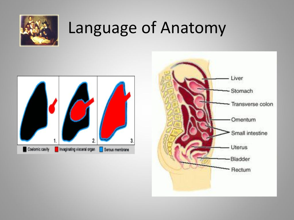 Nice Language Of Anatomy Picture Collection - Anatomy Ideas - yunoki ...