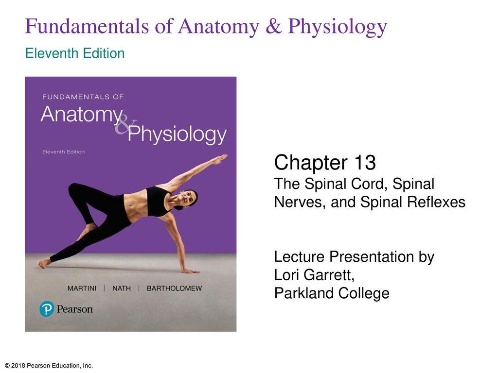 Vistoso Pearson Anatomy And Physiology Fotos - Anatomía de Las ...