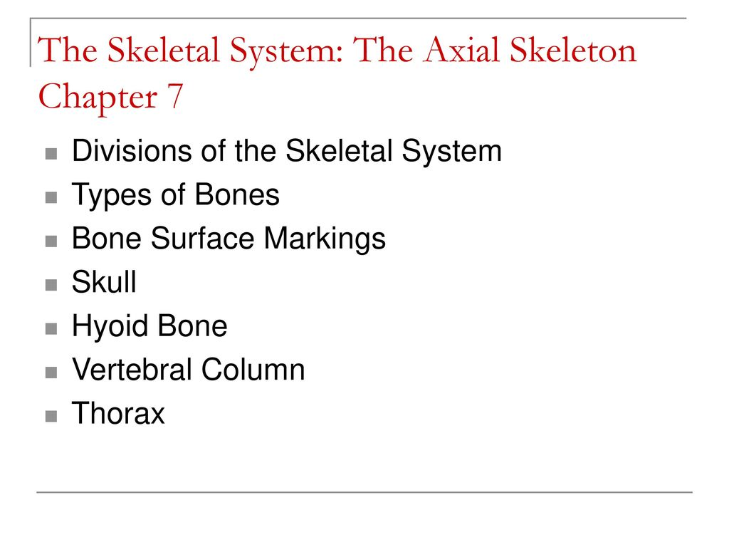 Amazing Anatomy And Physiology Chapter 7 Skeletal System Mold ...