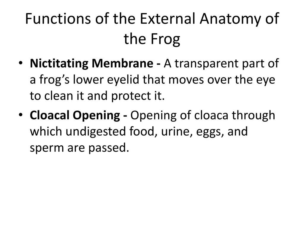 Old Fashioned External Anatomy Of Eye Pattern - Anatomy Ideas ...