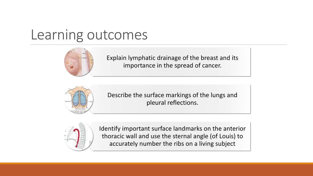 Funky Surface Anatomy Lung Image Anatomy Ideas Yunokifo