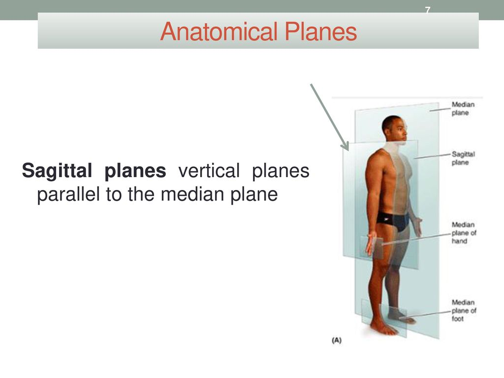 Sagittal Plane Anatomy Gallery Human Body Anatomy