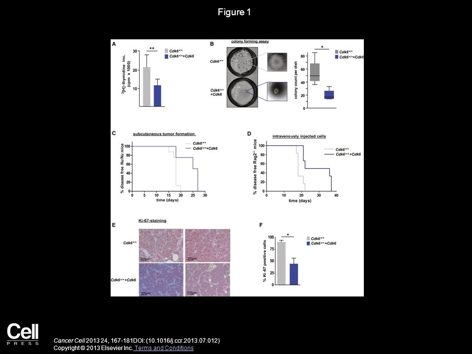 Figure 1 Enforced Expression of CDK6 in p185BCR-ABL-Transformed Cells Unmasks Its Tumor-Suppressing Activity.
