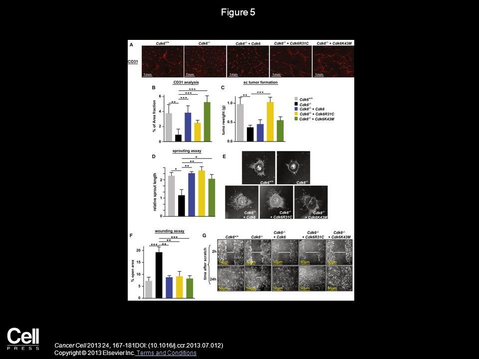 Figure 5 CDK6 Regulates Tumor Angiogenesis
