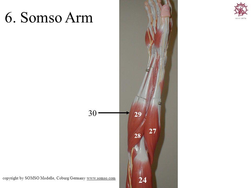 6. Somso Arm 30 29 27 28 copyright by SOMSO Modelle, Coburg/Germany www.somso.com 24