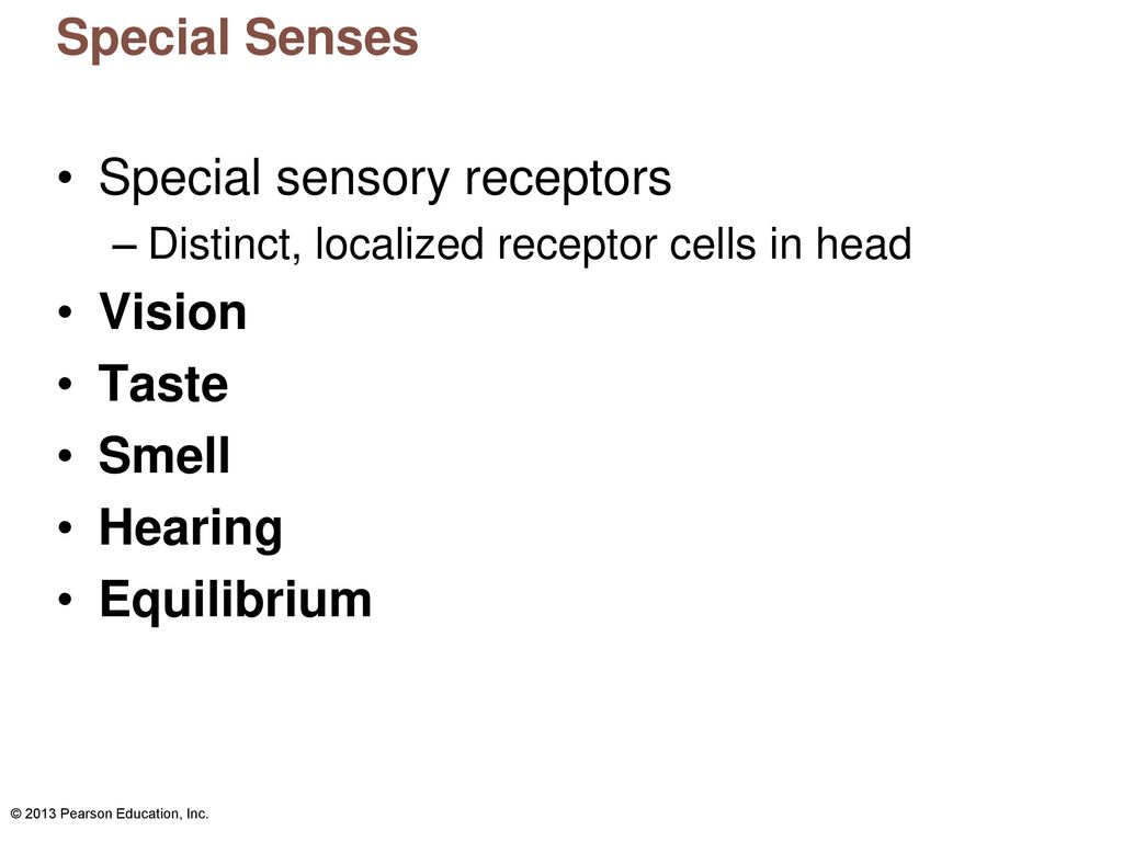 Fine Special Senses The Eye And Vision Anatomy Component - Anatomy ...